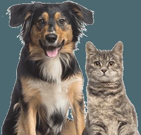 Kansas Humane Society | Animal Shelter | Wichita, KS
