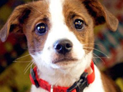 Kansas Humane Society Animal Shelter Wichita Ks