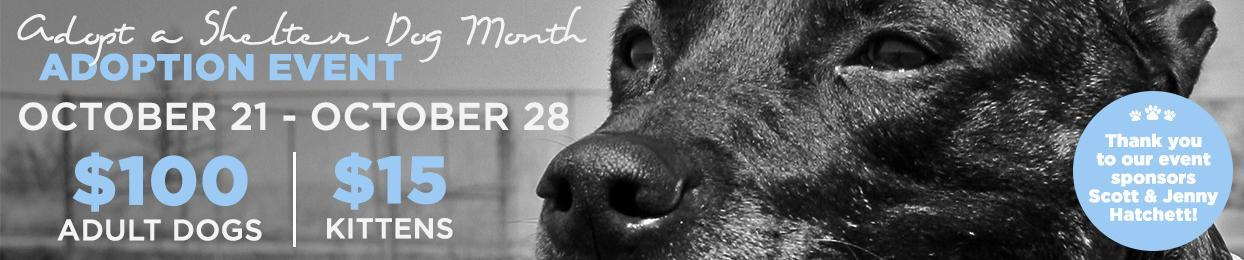 Adoption Special - Adopt a Shelter Dog Month - Oct 21-28